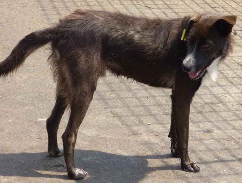 FINO - mâle croisé, taille moyenne né env 2014 (Pascani) - adopté par Laura (dpt 30) 11219011