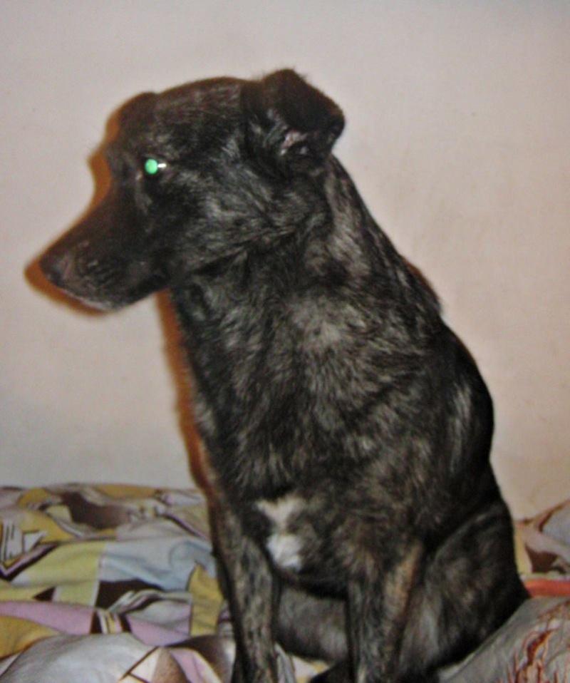 florin - BAILA (ex. MAMINA) - femelle croisée, née en 2012, taille petite à moyenne, (PASCANI) - adoptée par Elyane (dpt82) 11289710