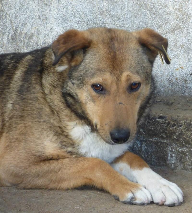 KYOO - 4 ANS DE BOX - mâle croisé de taille moyenne, né environ mai 2009 - REMEMBER ME LAND  , Adopté par Isabelle (Belgique) 11336910