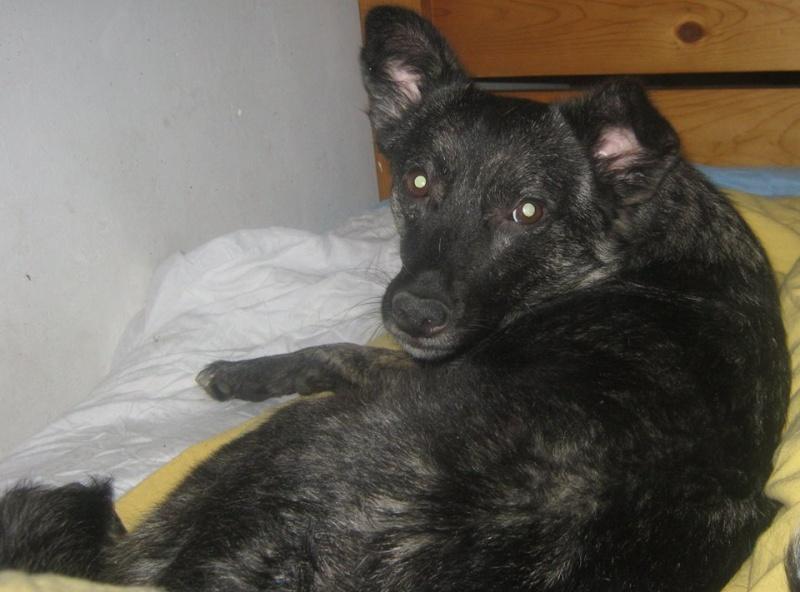 florin - BAILA (ex. MAMINA) - femelle croisée, née en 2012, taille petite à moyenne, (PASCANI) - adoptée par Elyane (dpt82) 11351510