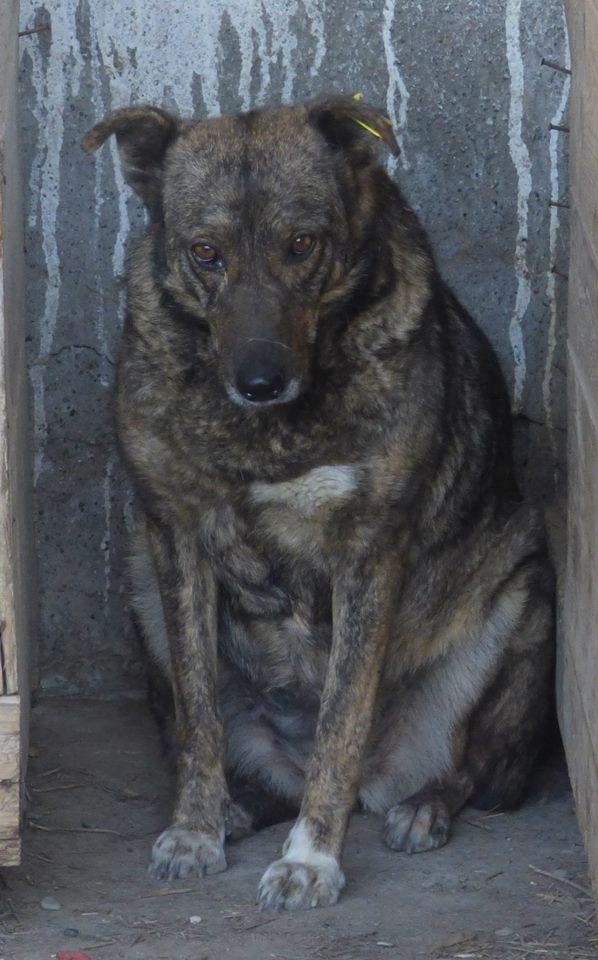 ** HEIWA ** + 5 ANS DE BOX - femelle croisée de taille moyenne, craintive, née environ début juin 2011 - adoptée par Brigitte (91)  11391310