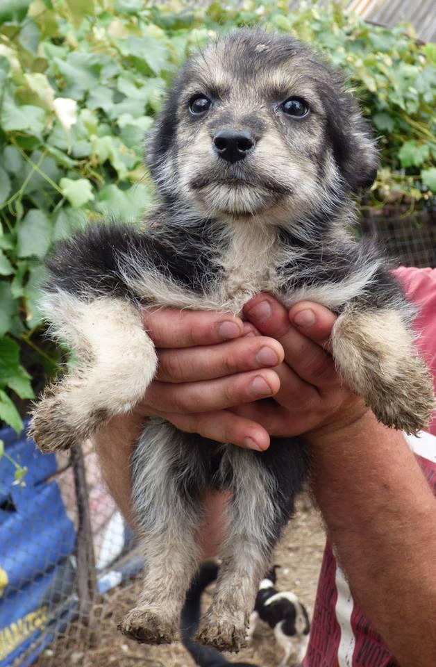 Lucian - CHEROKEE chiot femelle née en mars 2015 taille moyenne, croisée -en pension chez Lucian - adoptée par Sabrina (dpt77) 11703010