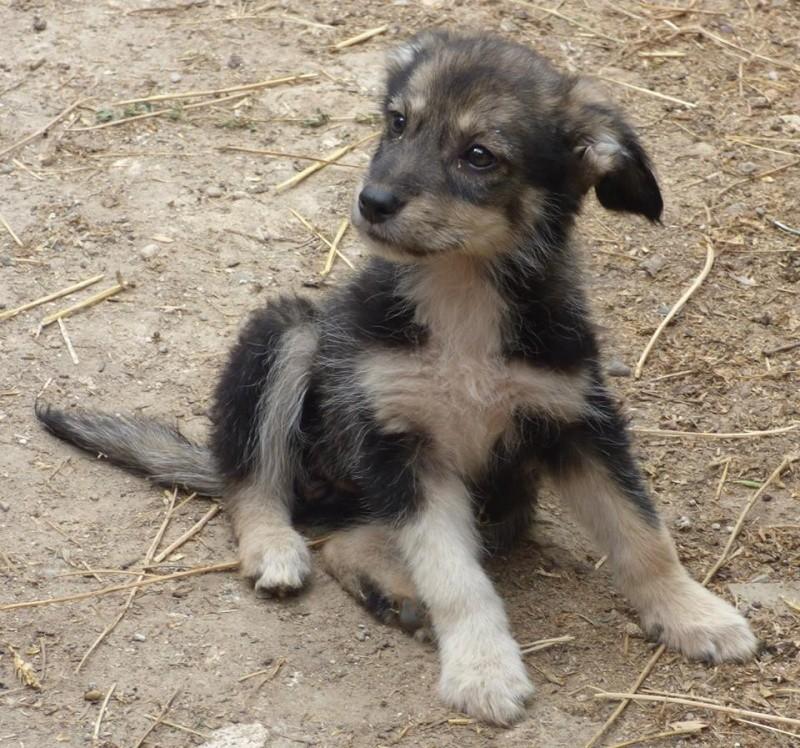 Lucian - CHEROKEE chiot femelle née en mars 2015 taille moyenne, croisée -en pension chez Lucian - adoptée par Sabrina (dpt77) 11745510