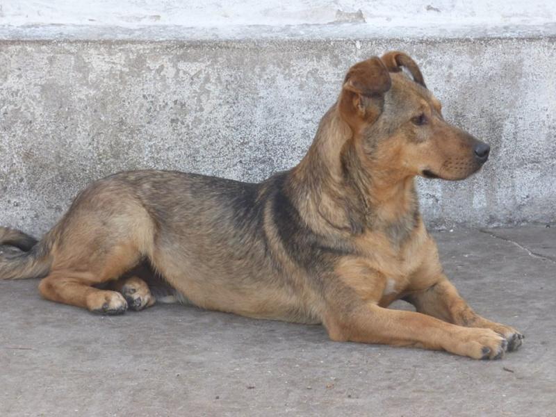 BOWH - mâle croisé, de petite  taille, né env 2012  (PASCANI) - adopté par Magali et François-Xavier (68) 11800110