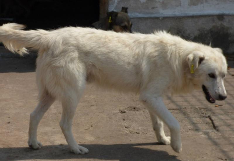 GALAK: mâle croisé, taille moyenne né en 2013 (Pascani)- ADOPTE dans le 88- DCD 11894510