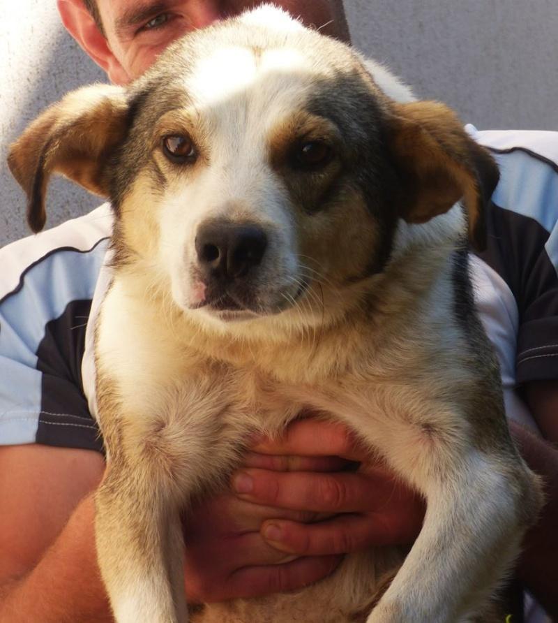 florin - JELLY (ex FANEL), mâle, croisé, taille moyenne, né en juin 2014 -  REMEMBER ME LAND - Adopté par Amandine et Kendy (13) 11934910
