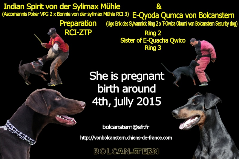 Saillie 2015 Bolcanstern Dobermann - Page 2 Pub310