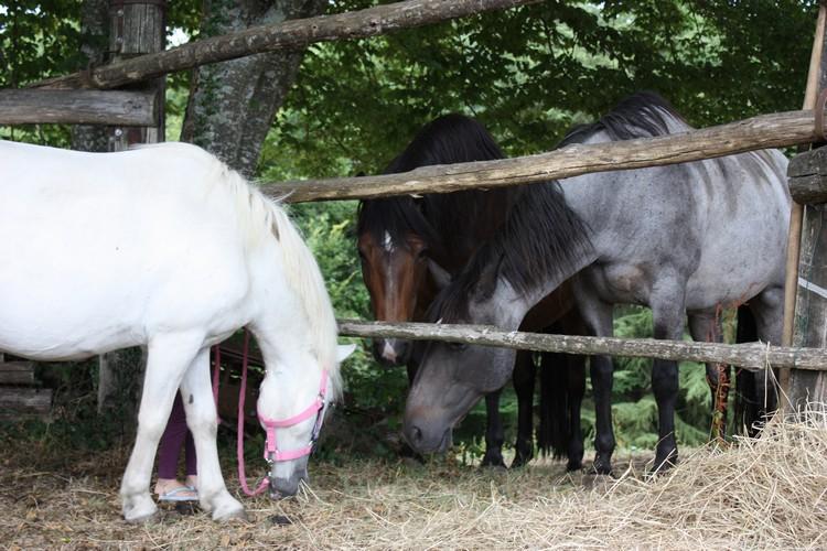 APACHE - ONC poney typé Shetland né en 1997- adopté en juillet 2015 par Claire Apache17