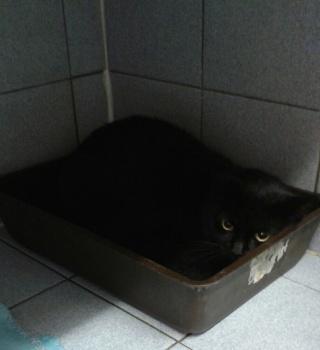 Chatte noire, 8 ans, Var Chatte10