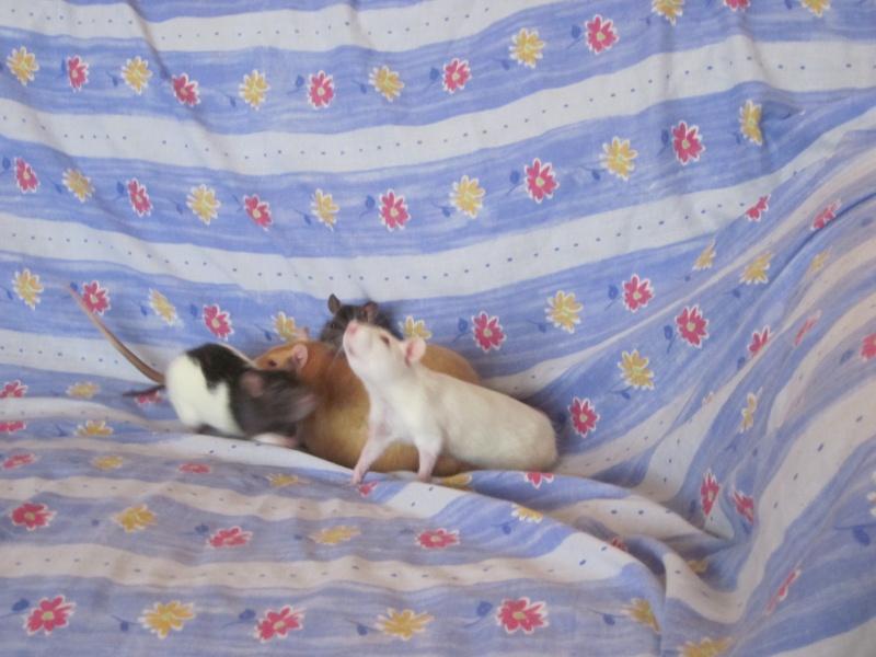 Les petits ratous kinder de miss Tagada 🐀 - Page 3 Img_2014