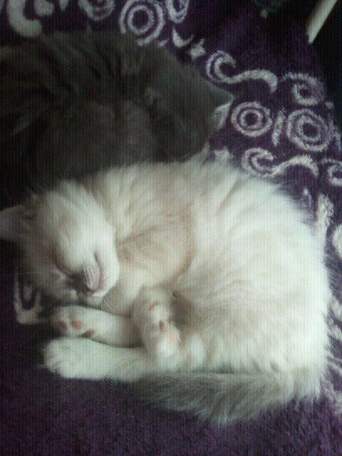 Loki et Làska, frère et sœur Lyoska10