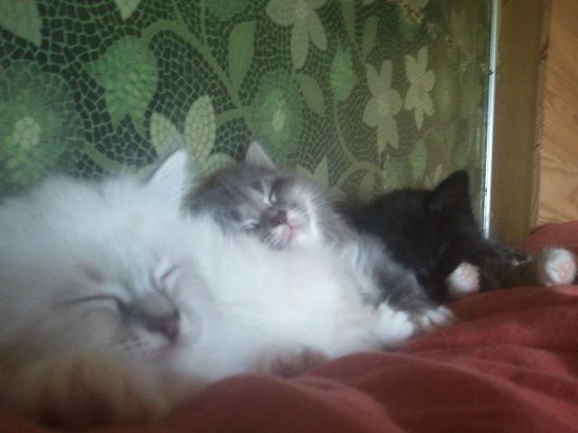 Loki et Làska, frère et sœur Lyoska11