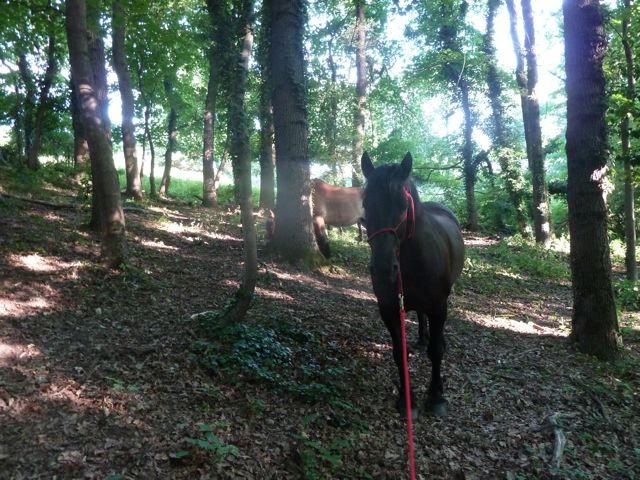 chevaux et chaleur P1040614