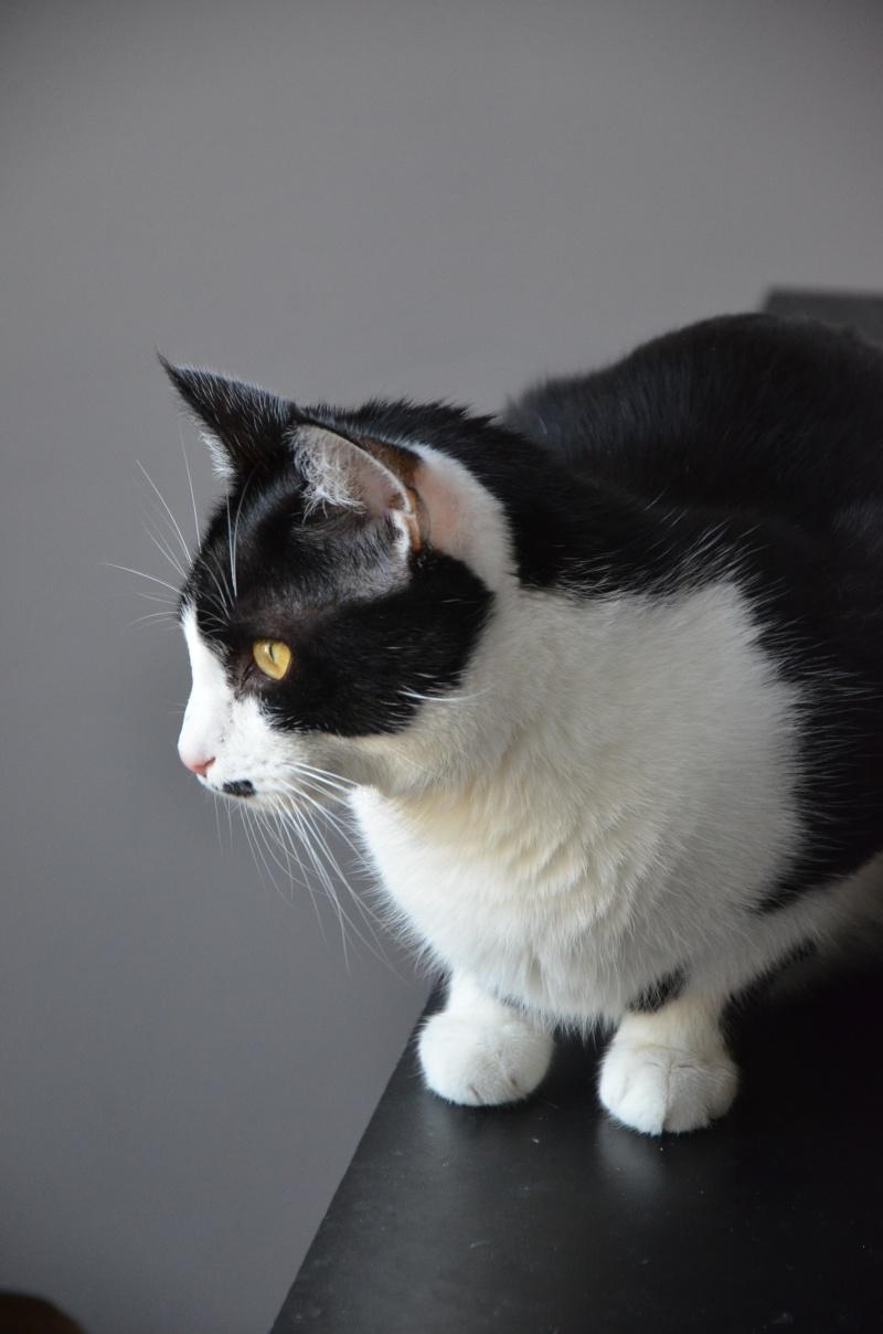 Mikado, noir et blanc, né en Mars 2014  Dsc_6310