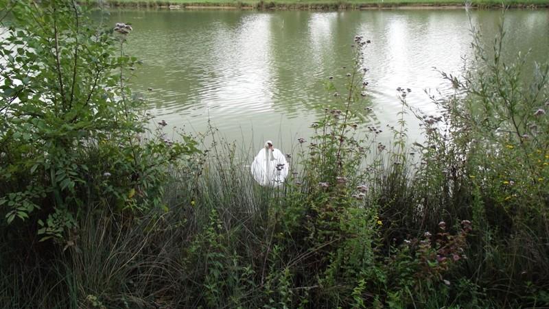 Le lac Dscf5611