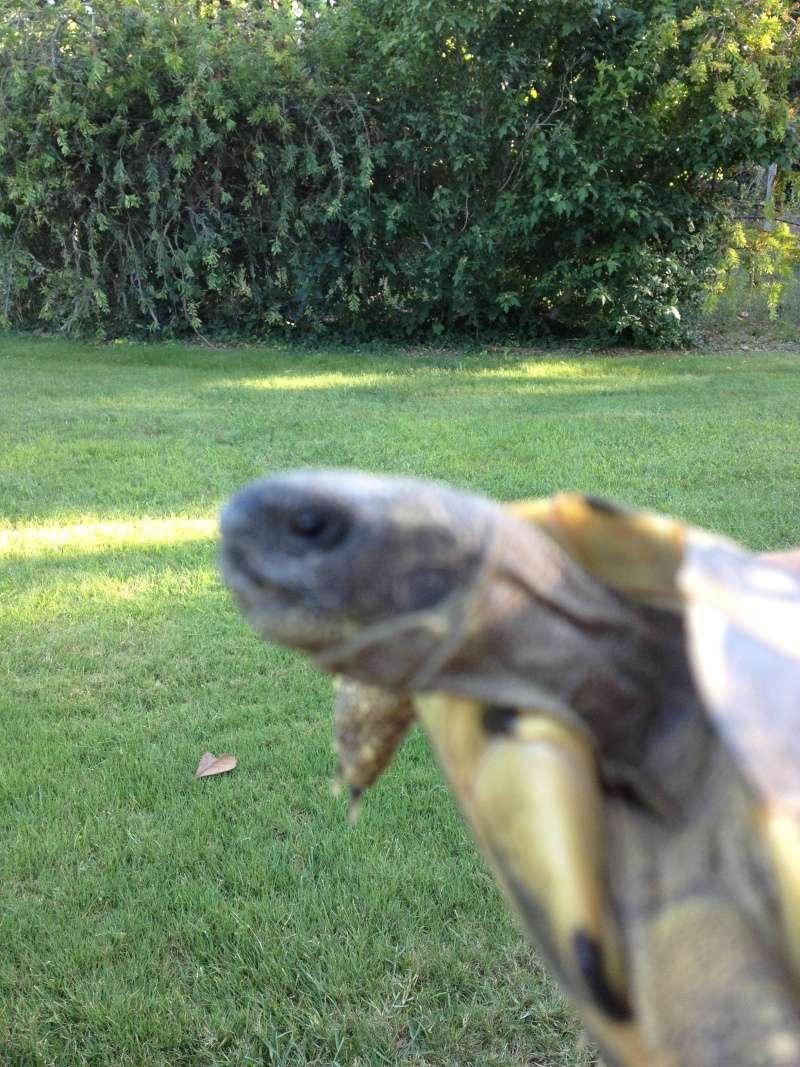 Identification tortue trouvée Tete_410