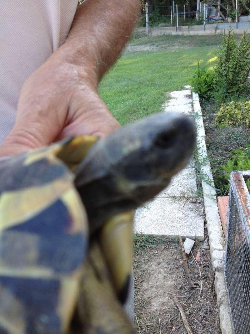 Identification tortue trouvée Tete_710