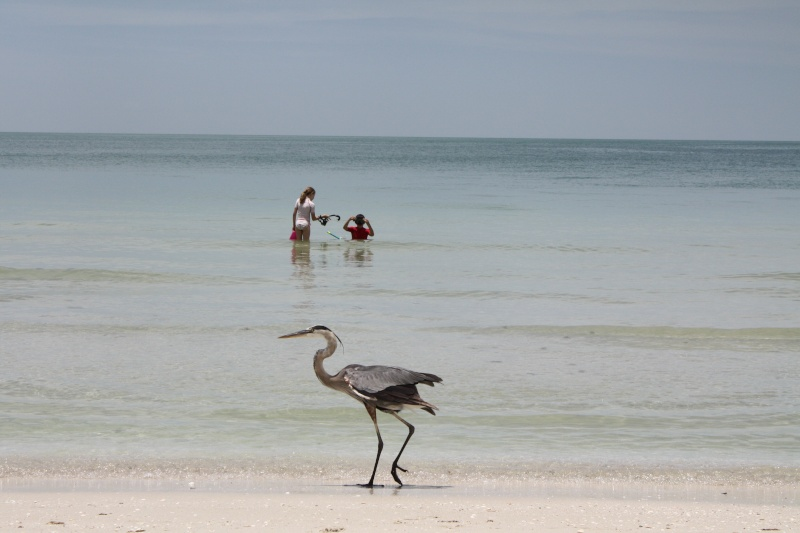 CR de 2 semaines en Floride ! Img_8617