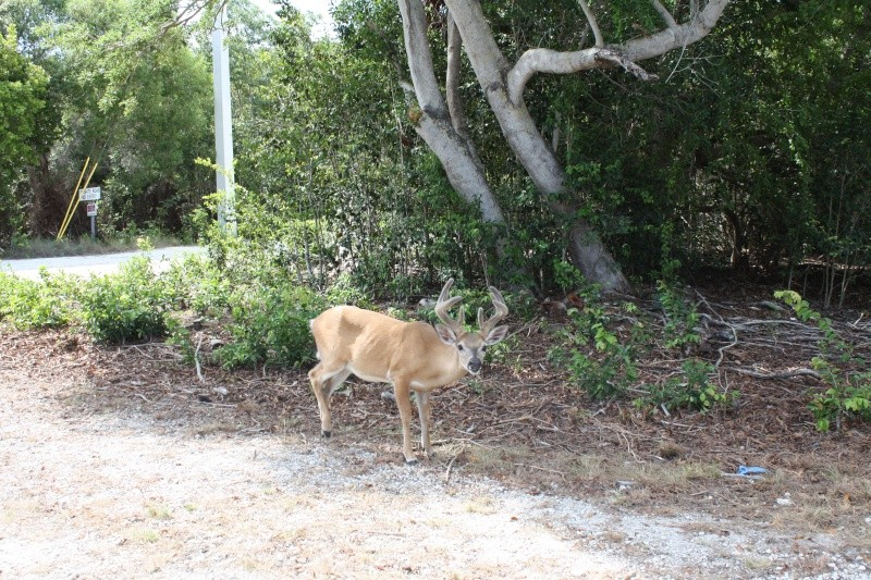 CR de 2 semaines en Floride ! Img_8713