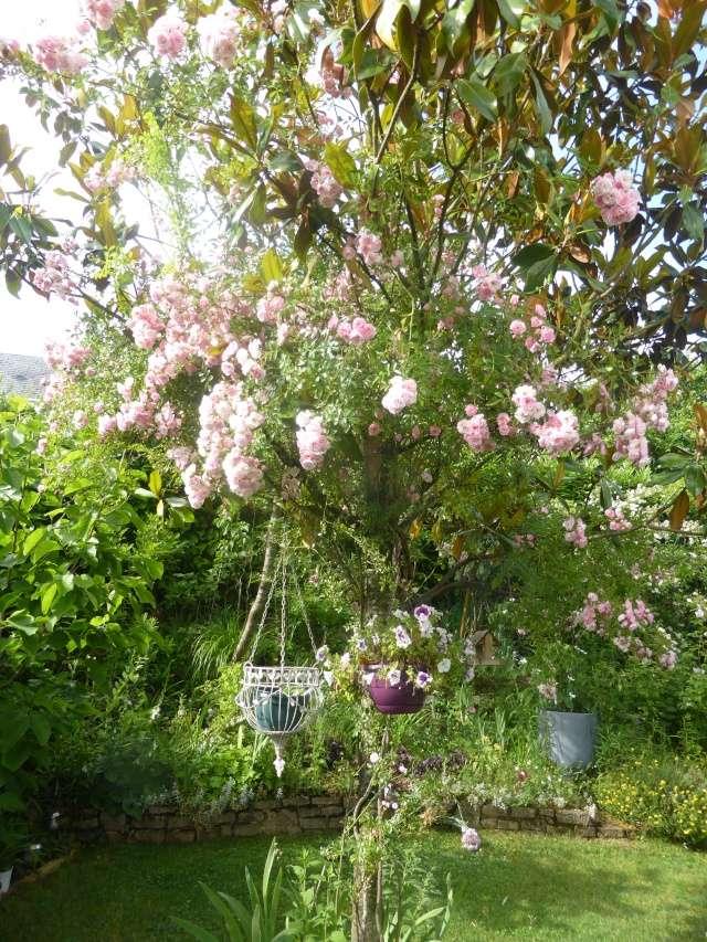 rosier 'La Fraîcheur' 12-06-17