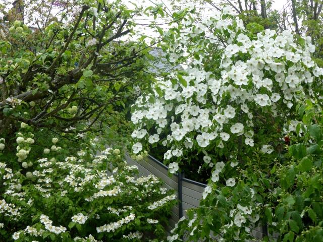massifs en blanc - fleurs et feuillages : belles associations  26-04-10