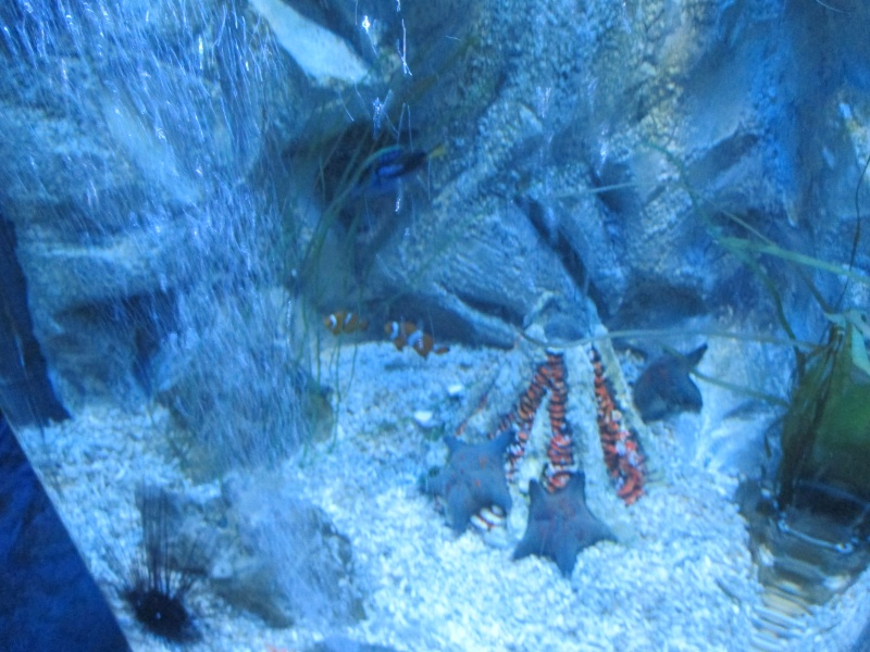 Sea Life Centre Gt. Yarmouth 06011