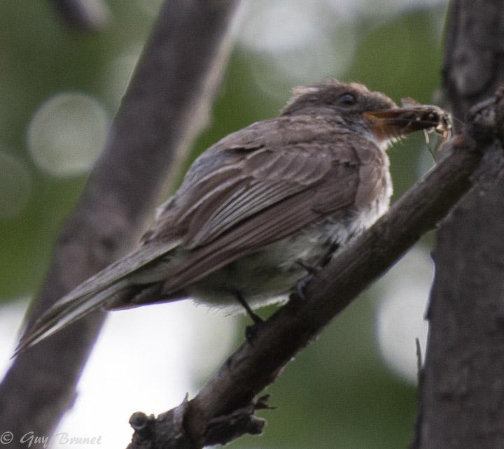 Deux oiseaux à identifier s.v.p. 5bru8710
