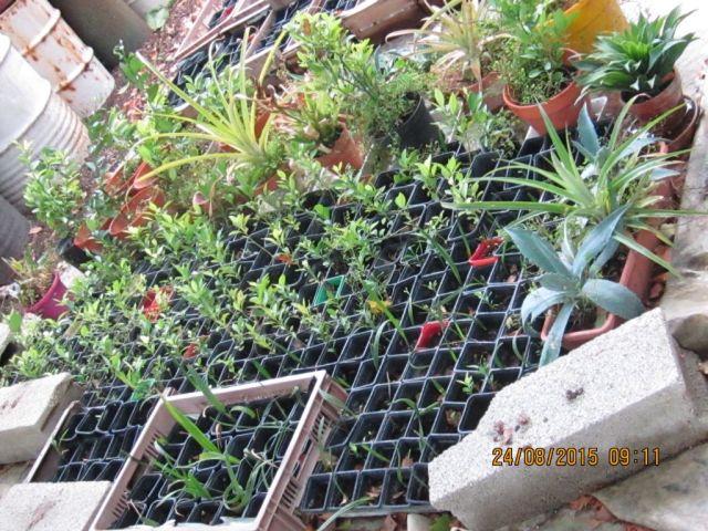 comment créer un verger à partir de graines,  noyaux,  pepins... Photo_33