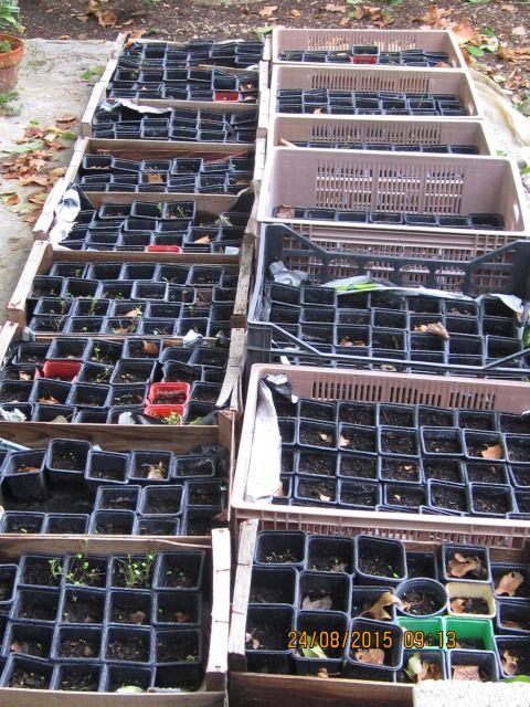 comment créer un verger à partir de graines,  noyaux,  pepins... Photo_35