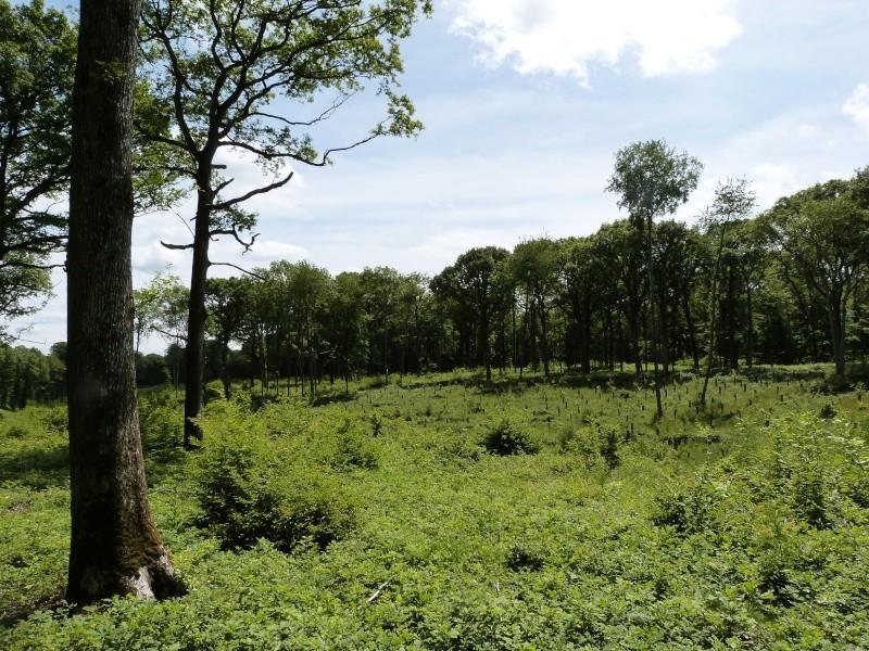 Forêt de Dourdan (91) P1270113
