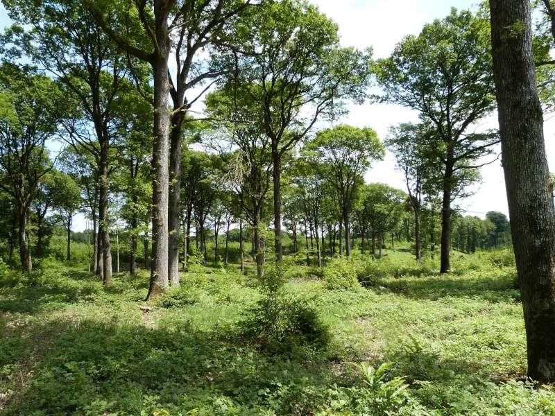 Forêt de Dourdan (91) P1270114