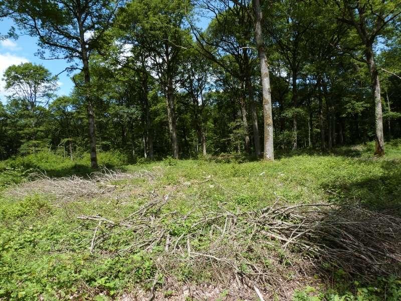 Forêt de Dourdan (91) P1270115