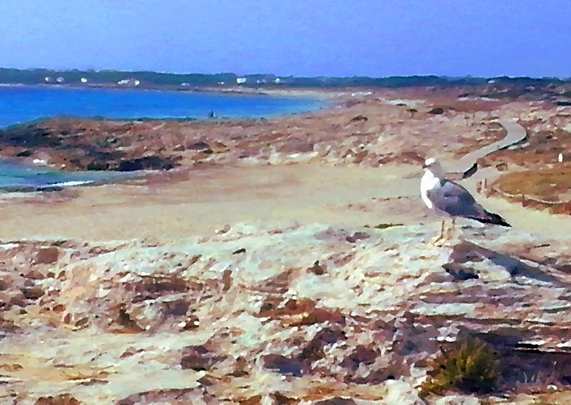 Formentera 17_gab10