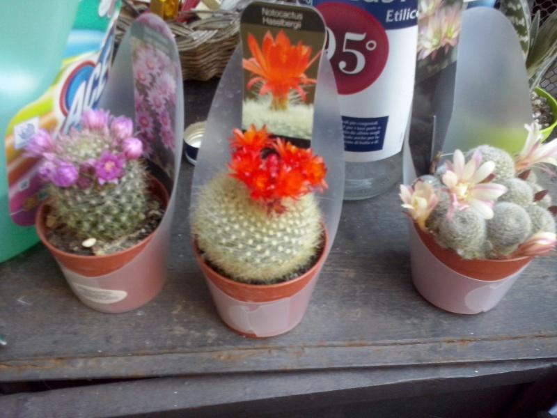 I miei Cactus Cam00412