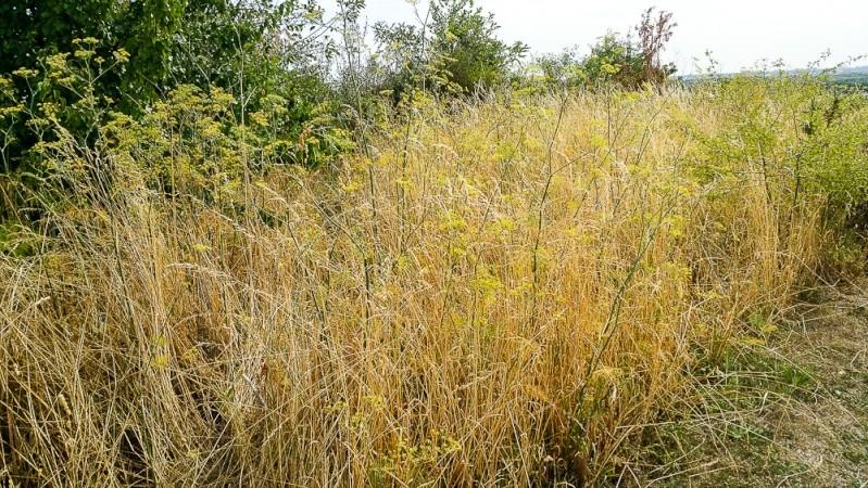 Le Parc des Carrières et les herbes sauvages 20150810