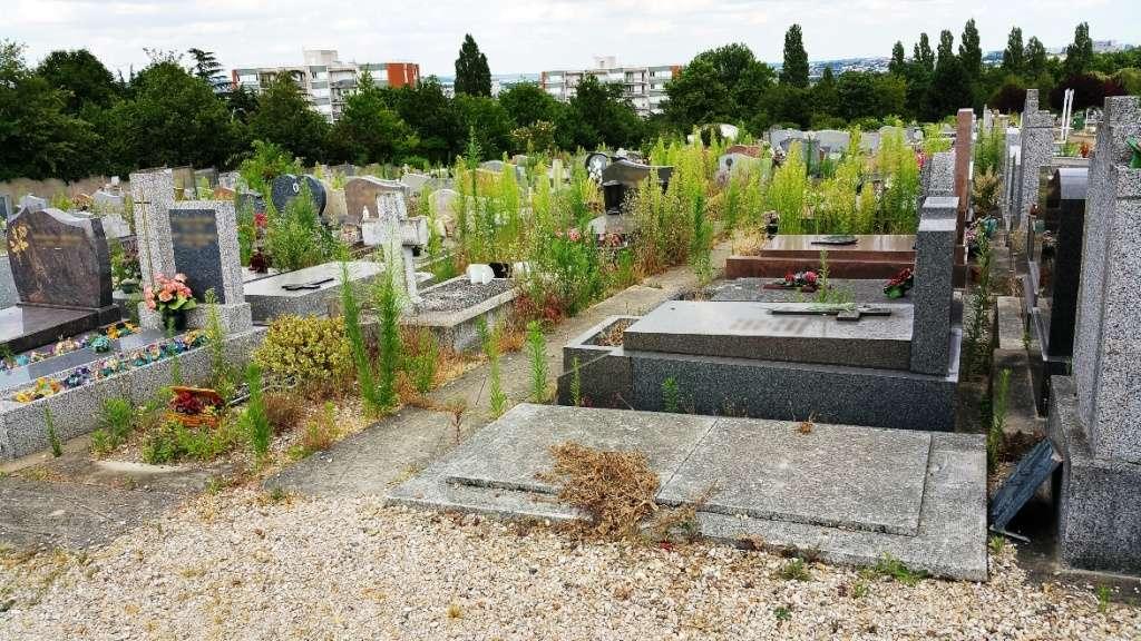 Le cimetière et les herbes sauvages Herbes11