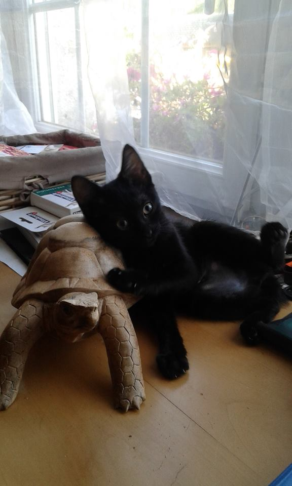 Lovely femelle noire née le 6 mai 2015 11826010