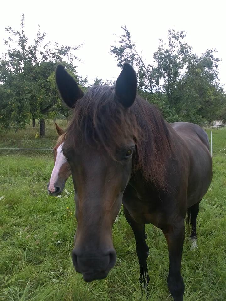 cheval - différence âne/cheval - Page 2 11403010