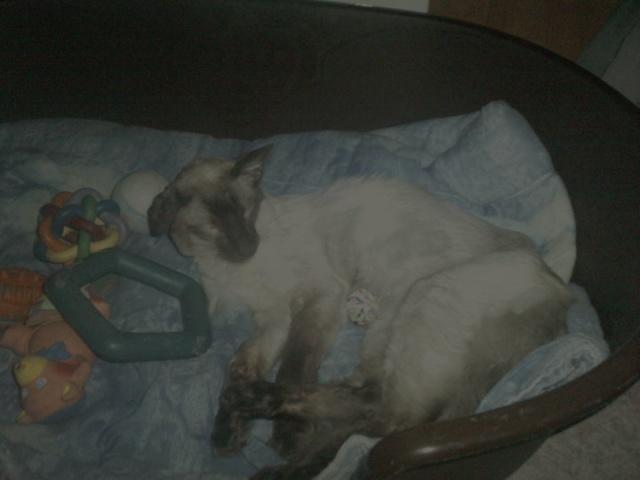 ma tribut de chats <3 40219_10