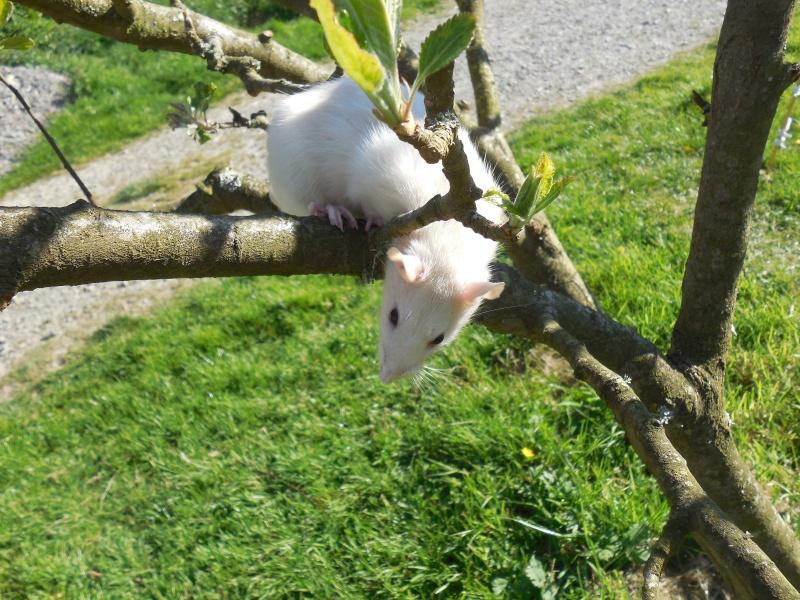 Adoption de deux ratounes Dscn2610