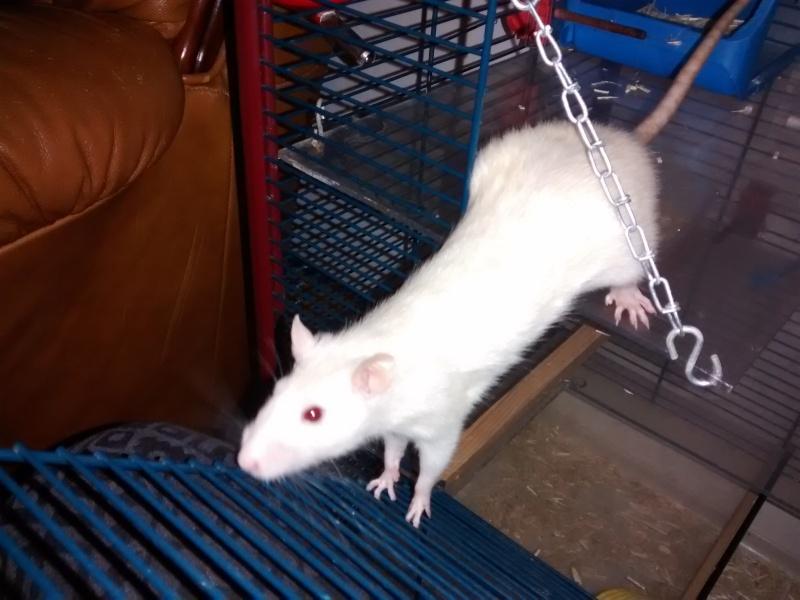 Adoption de deux ratounes Img_2012