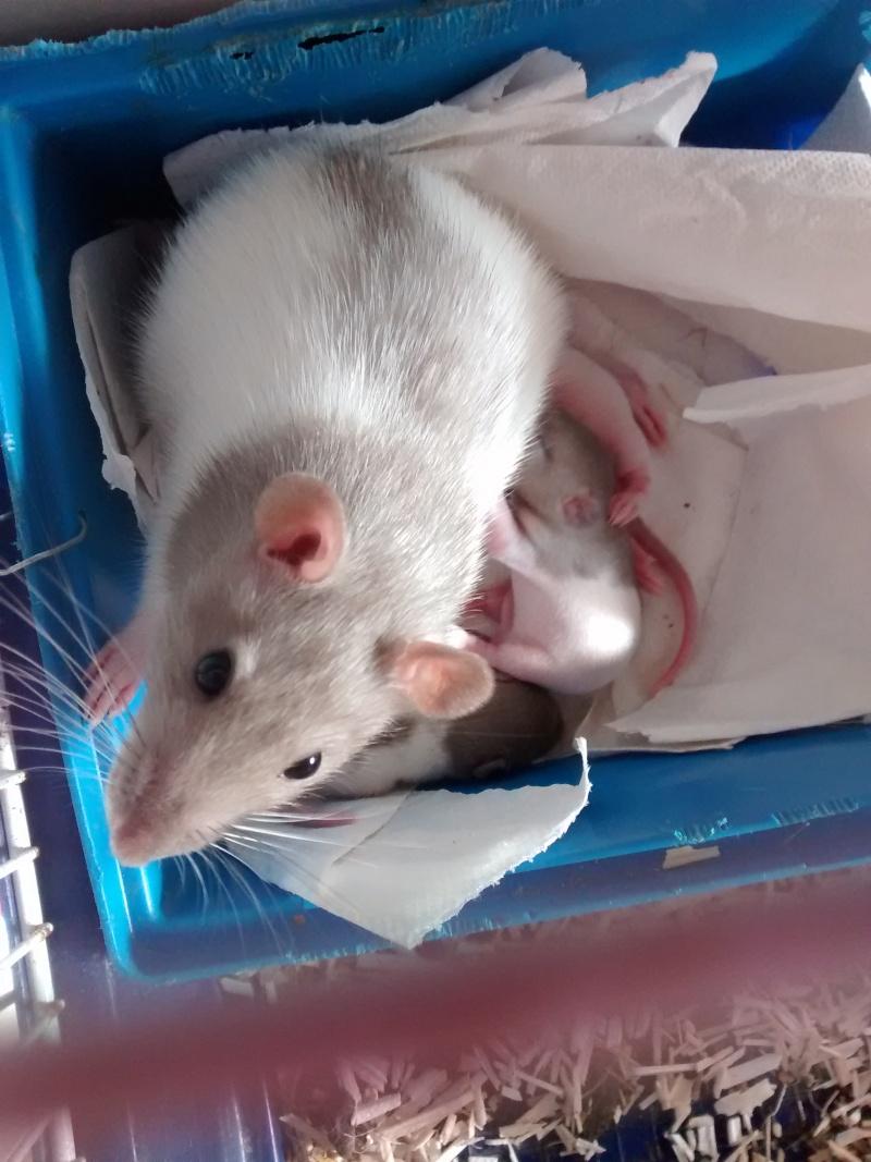 Adoption de deux ratounes Img_2013
