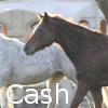 Zorte Berria: Nouvelle Chance Cash10
