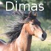 Zorte Berria: Nouvelle Chance Dimas10