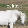 Zorte Berria: Nouvelle Chance Eclips12