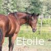 Zorte Berria: Nouvelle Chance Etoile12