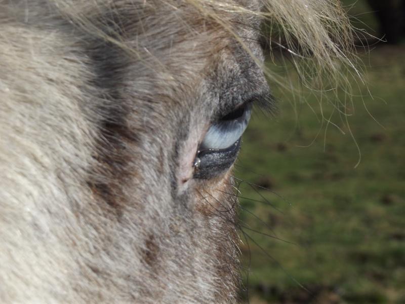T'as de beaux yeux !! Les_ju10