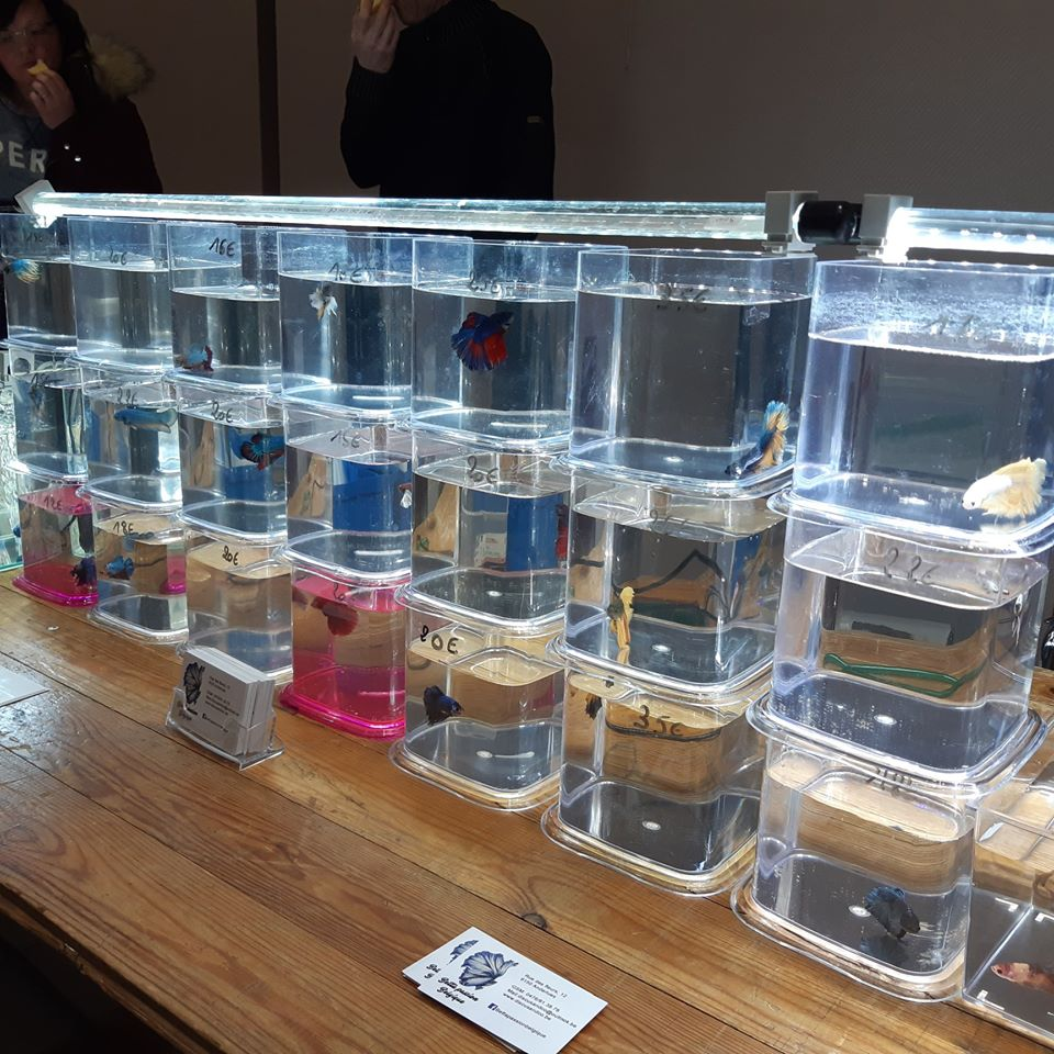5eme Bourse aquariophile à Courchelette (59) le 2 février 2020 00510