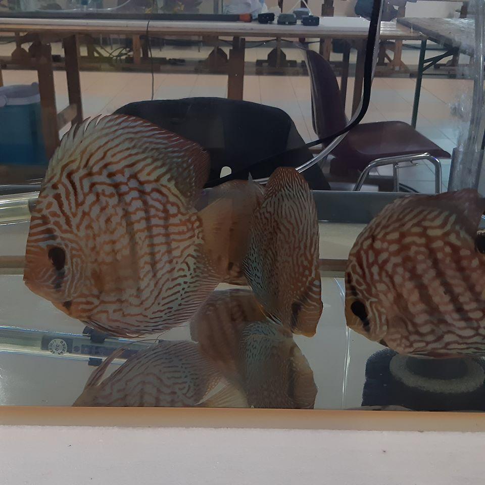 5eme Bourse aquariophile à Courchelette (59) le 2 février 2020 00610