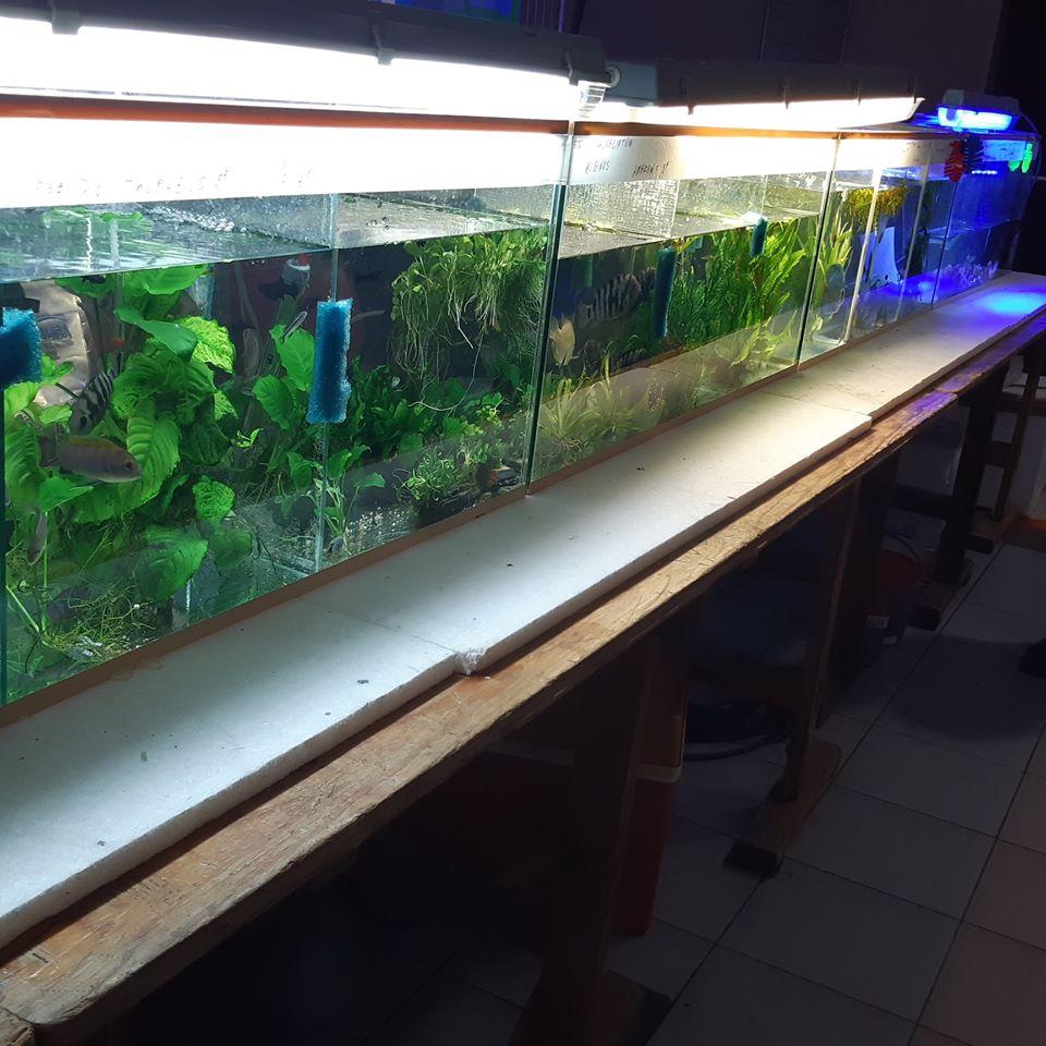 5eme Bourse aquariophile à Courchelette (59) le 2 février 2020 00710